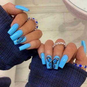 butterfly in blue summer